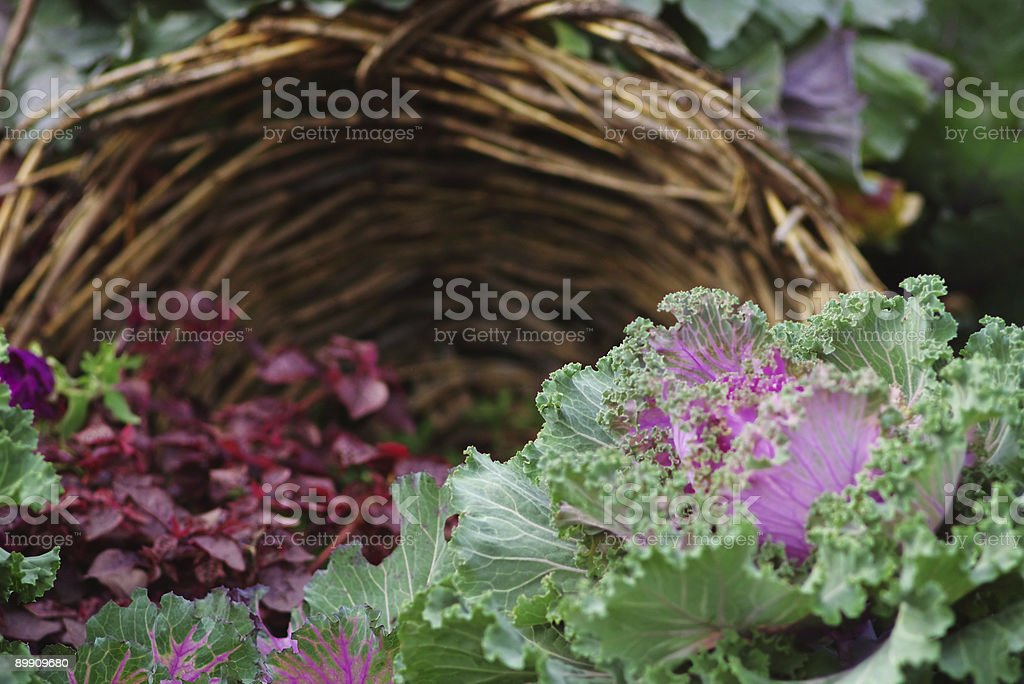Kohl flowerbed Lizenzfreies stock-foto