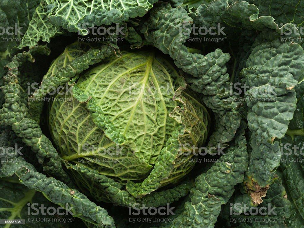 Cabbage, full frame stock photo