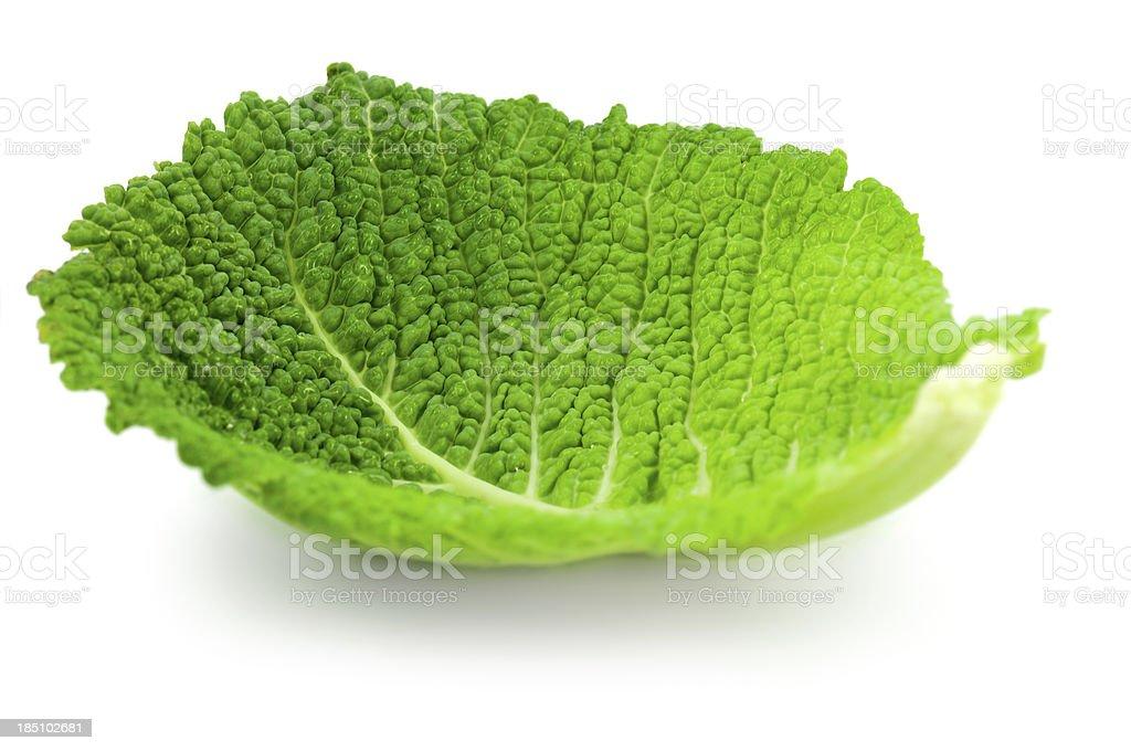 cabbage leaf stock photo