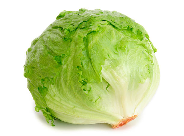cabbage lettuce - lettuce stock photos and pictures
