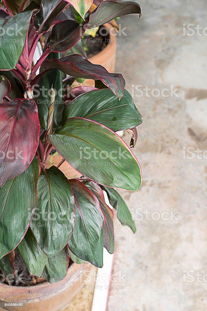 Cabbage palm stock photo