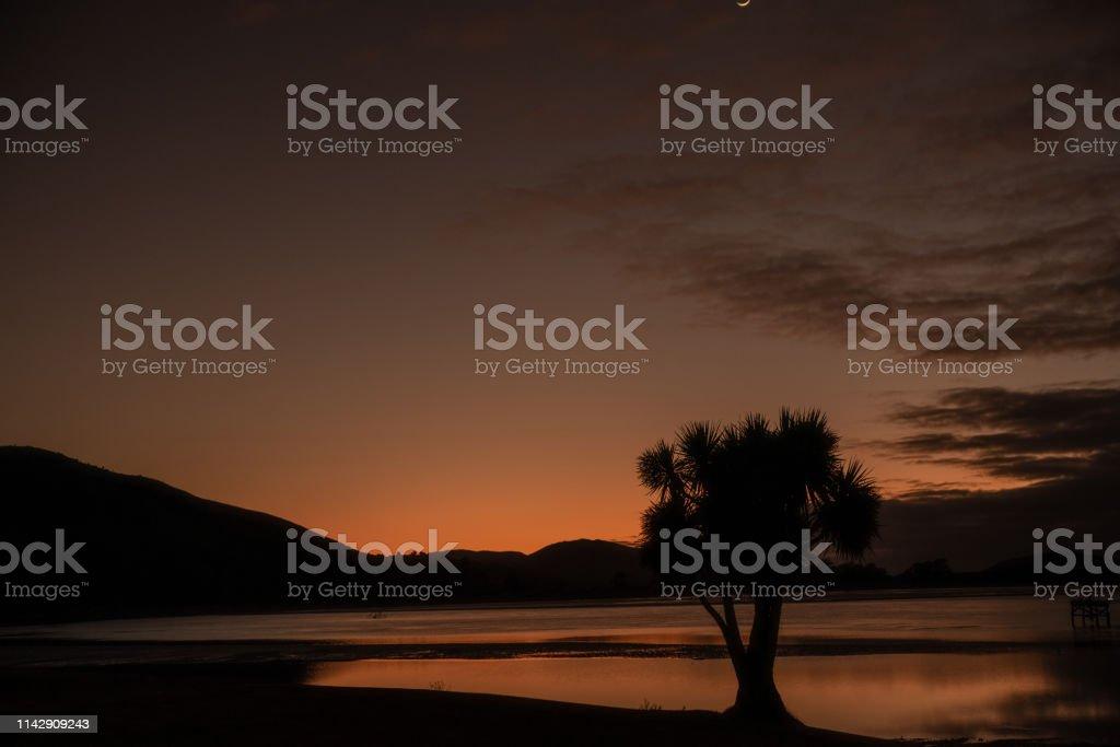 Cabbage tree on a beach stock photo