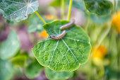 Vector Caterpillar linear icon