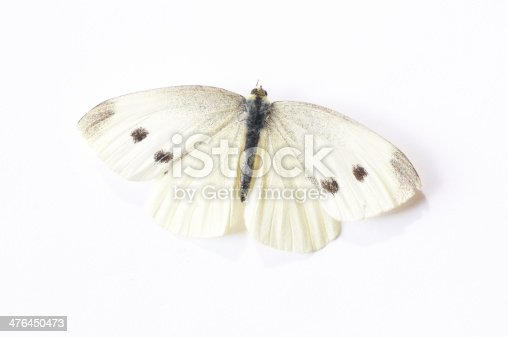 Butterfly with white background