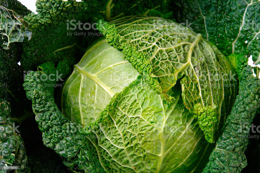 Cabbage-2 royalty-free stock photo