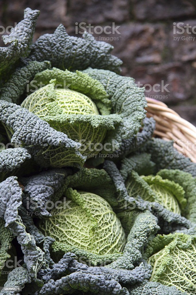 Cabbages royalty-free stock photo