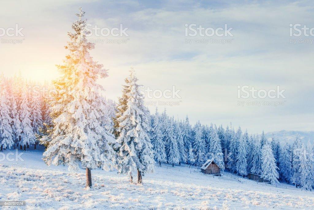 cabana nas montanhas no inverno. Cárpatos, Ucrânia, Europa - foto de acervo