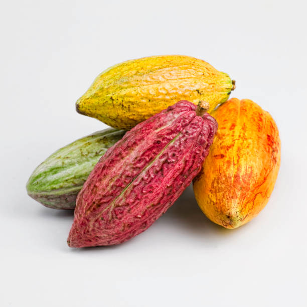 Cacao fruits Cacao fruits composition on white background. Front view. Studio shot. Isolated. Copy space. cacao fruit stock pictures, royalty-free photos & images