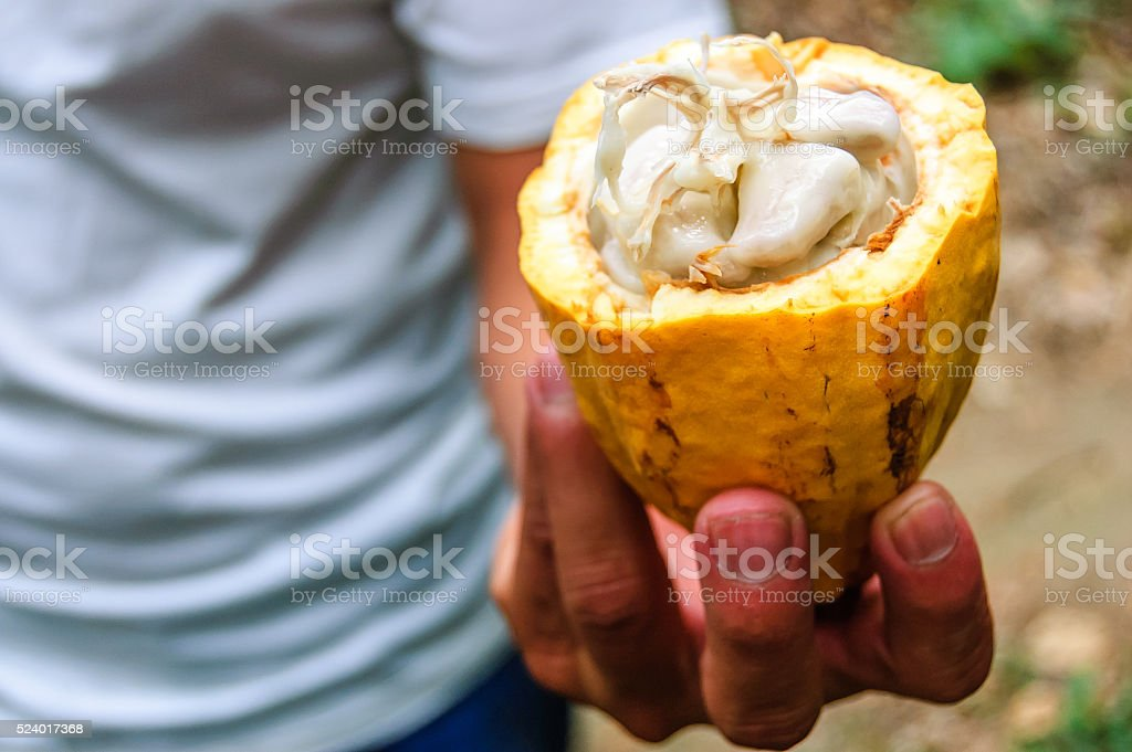 Cacao pod & cacao beans, Guatemala stock photo