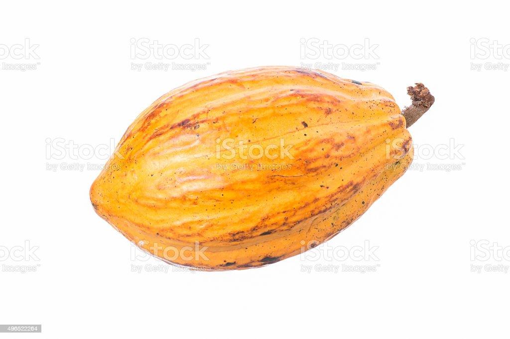 Cacao pod isolated on white stock photo
