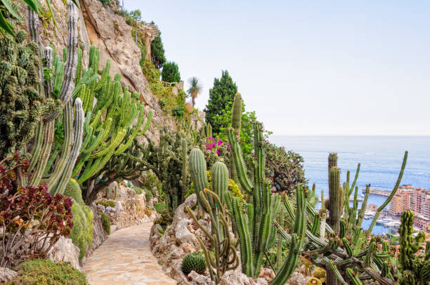 Cacti and other succulents - Monaco stock photo