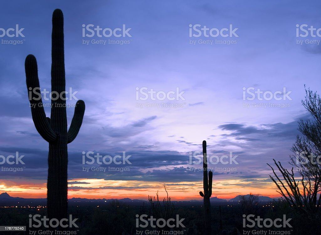 Cacti at sunset in Saguaro National Park royalty-free stock photo