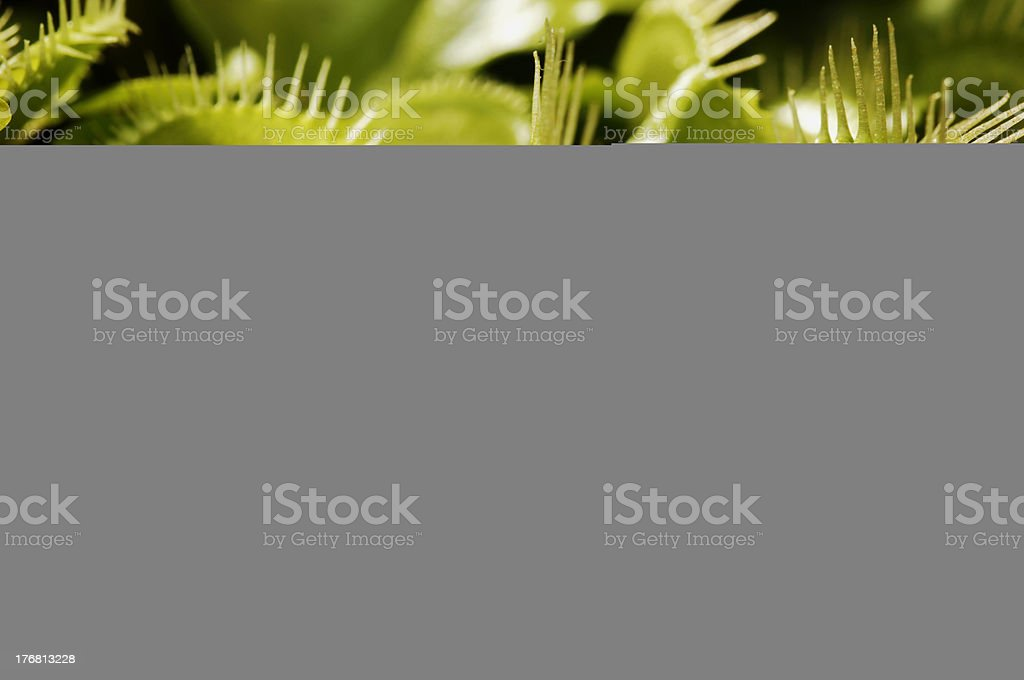 Cacti blanked out by grey at bottom of screen stock photo