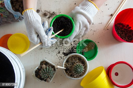 cacti, colorful pots, gloved hands top view