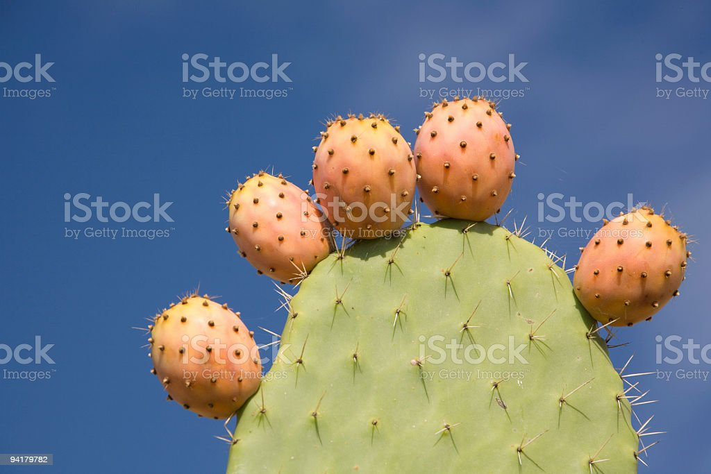 cacti fruit royalty-free stock photo