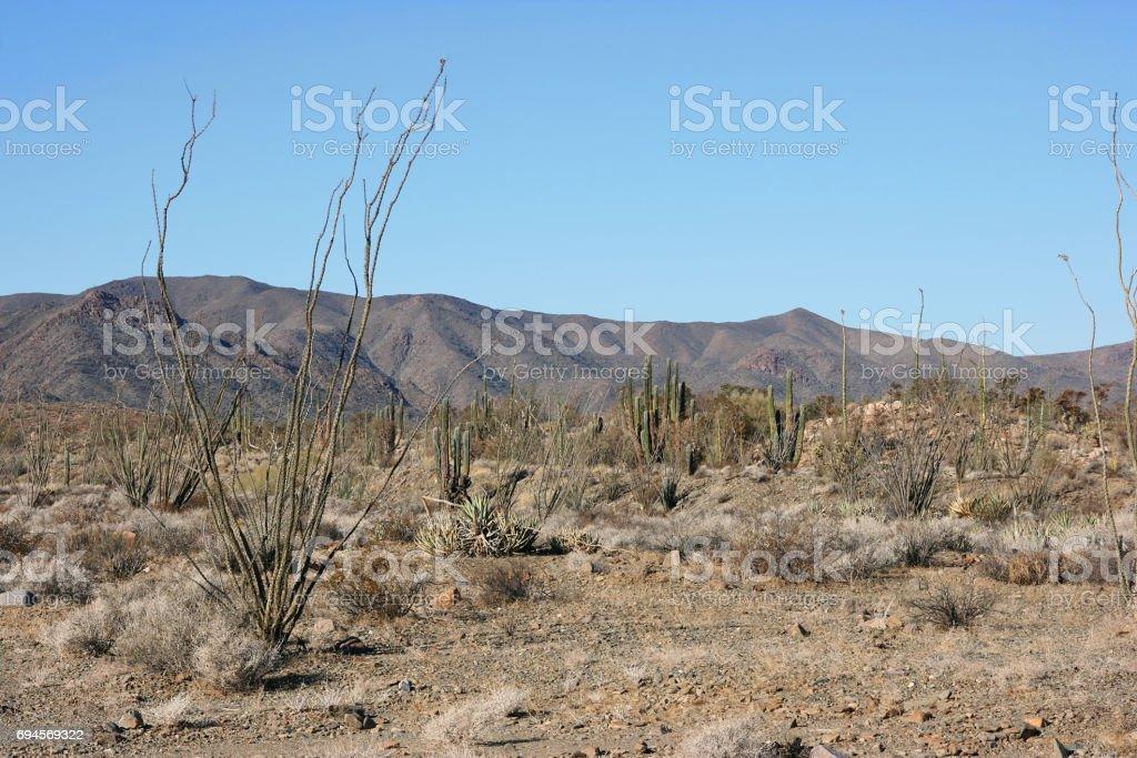 Cactus en el remoto desierto de Sonora, Baja California Norte, México - foto de stock