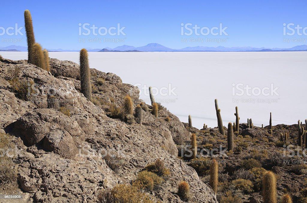 Cacti on the Isla del Pescado royalty-free stock photo
