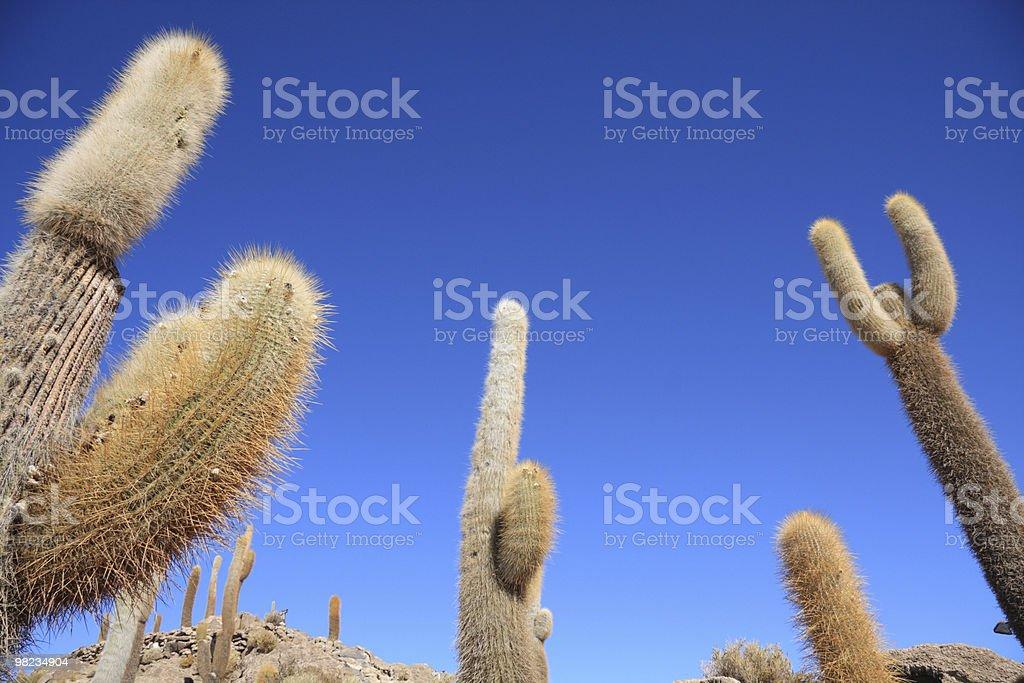 Cacti on the Isla del Pescado royalty-free stock photo