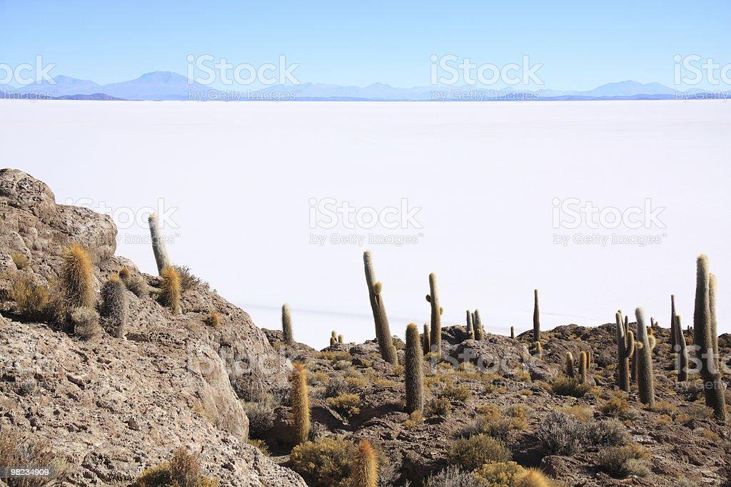 Cactus intatti sull'Isla del Pescado foto stock royalty-free