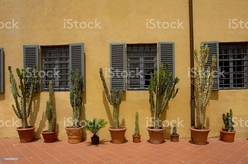 cacti stock photo