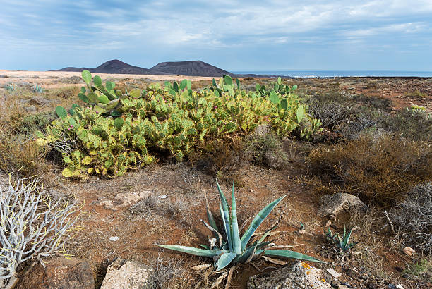 Cactueses und Vulkane auf Lanzarote – Foto