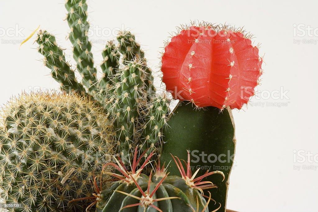 Cactus 1 stock photo