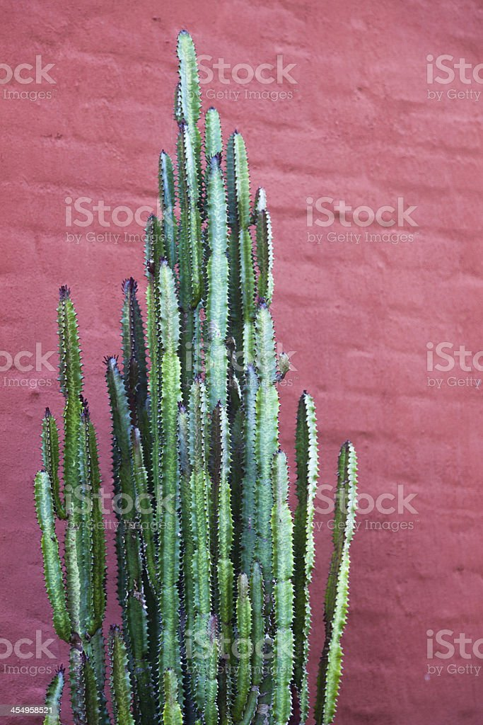 Cactus against a red wall stock photo