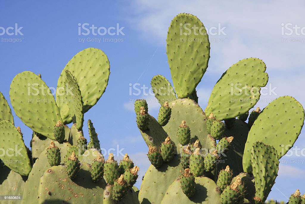 Cactus against blue sky stock photo