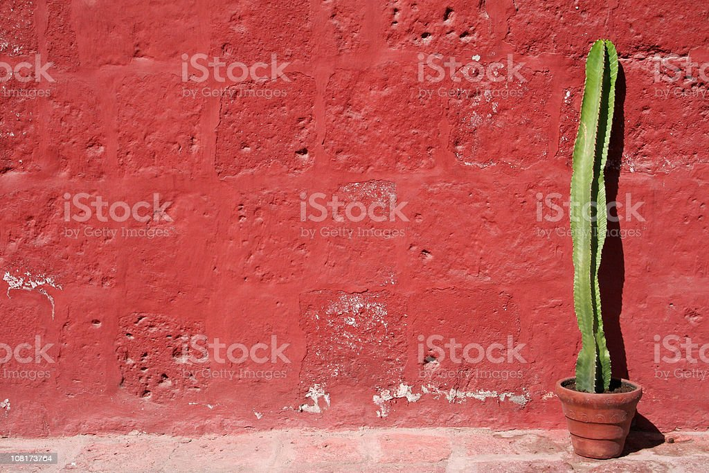 Cactus Against Red Wall  Absence Stock Photo