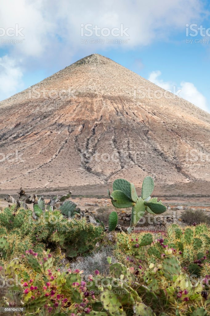Cactus and a volcanic Landscape royalty-free stock photo