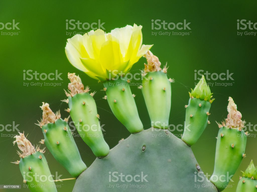 Cactus and bloom stock photo