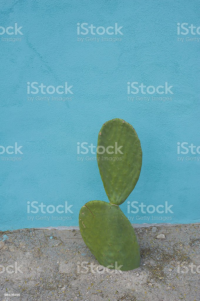 Cactus and Blue Wall royalty-free stock photo