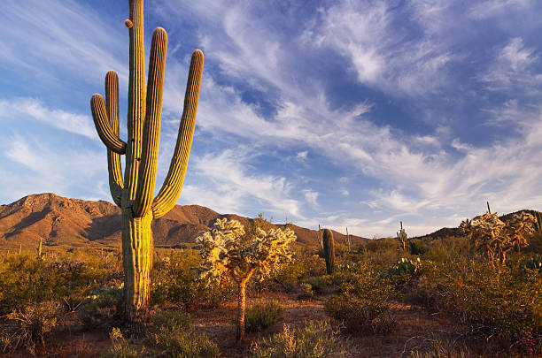 Cactus and desert landscape with bright blue sky background stock photo