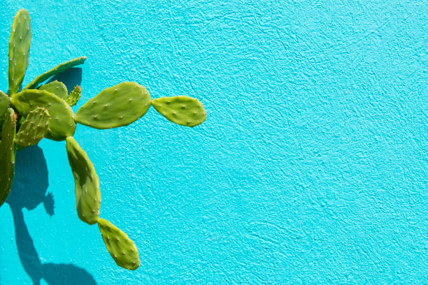 Cactus and light blue wall