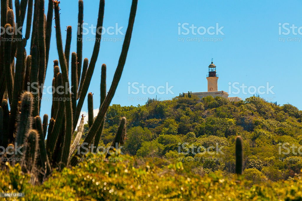 cactus and lighthouse stock photo