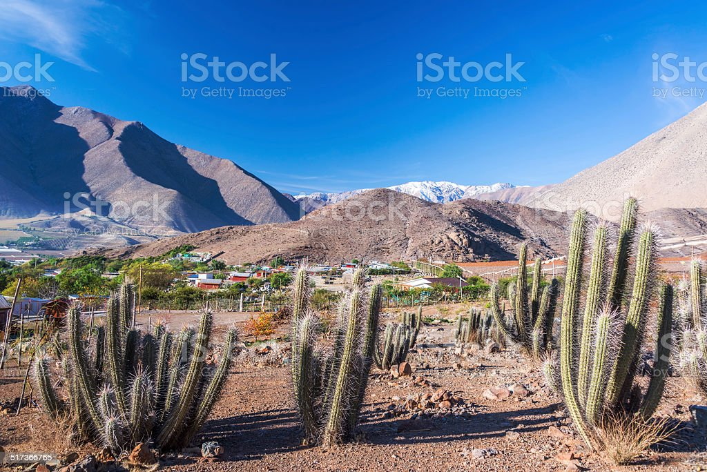 Cactus and Mountains stock photo