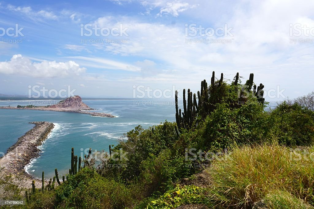 Cactus and Ocean stock photo
