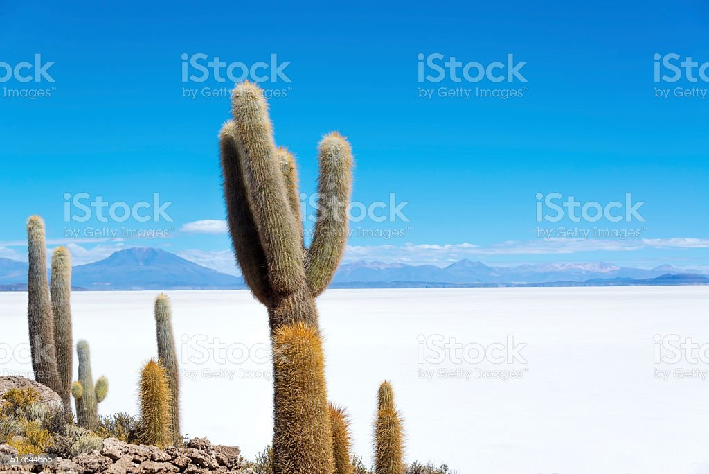 Cactus and Salt stock photo