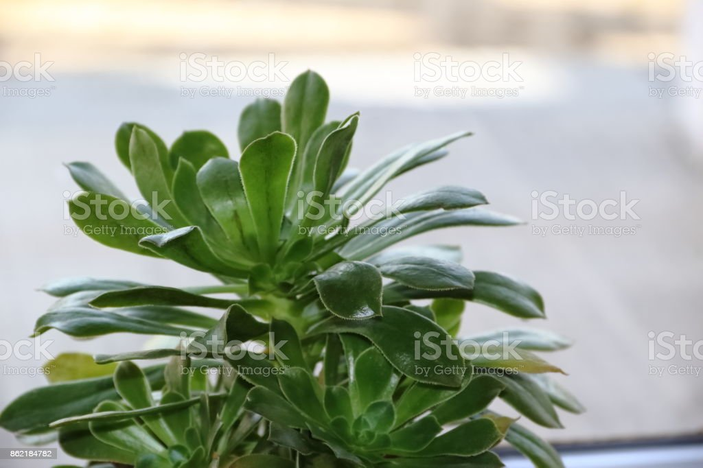 cactus and succulents in bloom in spring stock photo