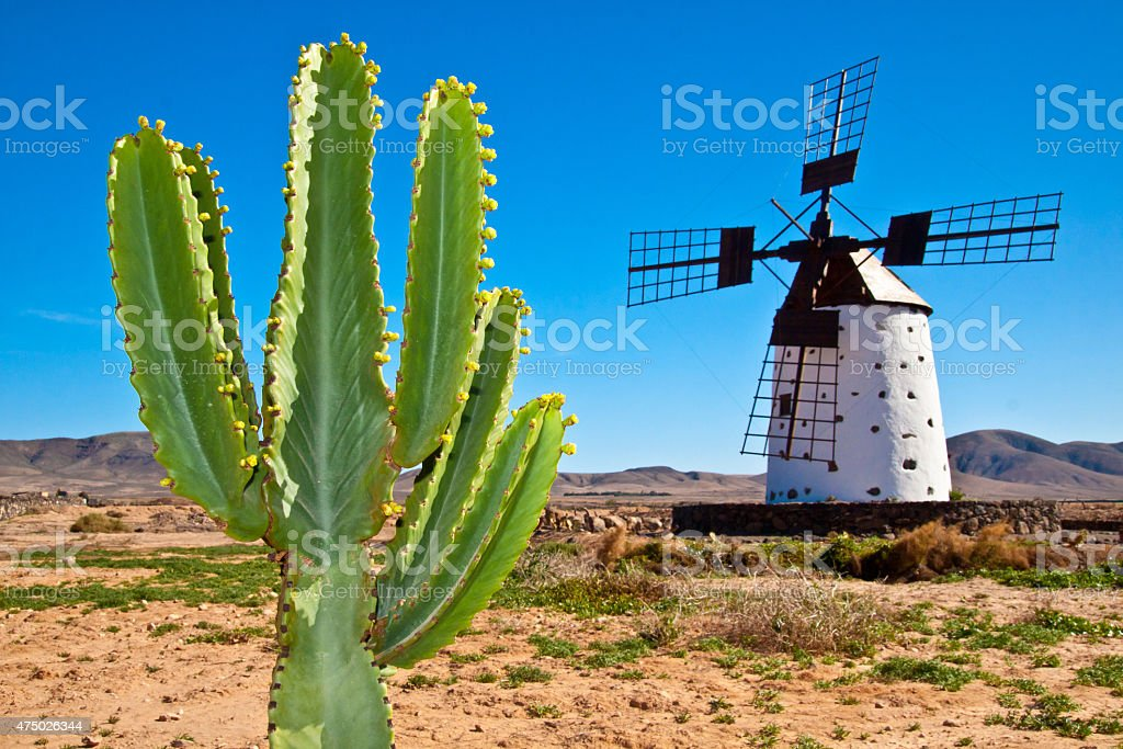 Cactus and the traditional windmill at Fuertaventura stock photo
