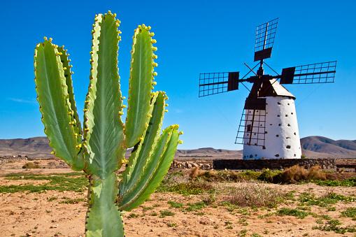 Kaktus Und Die Traditionelle Europäische Windmühle Im Fuertaventura Stockfoto und mehr Bilder von 2015