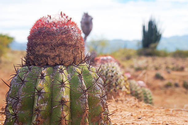 Cactus at desert stock photo