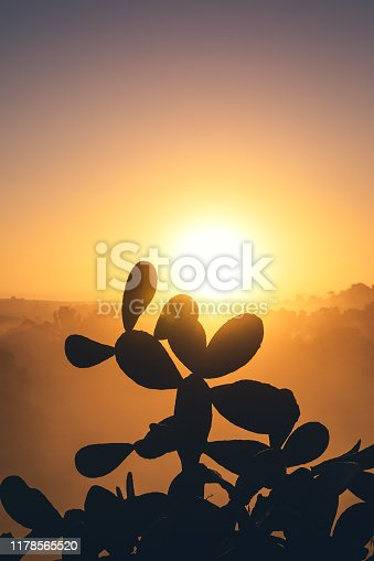 Silhouette of a cactus at sunset (Andalusia, Spain).