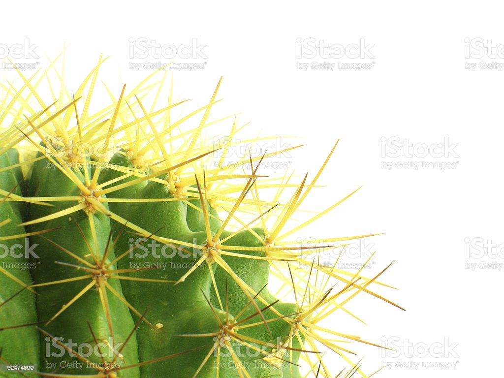 Cactus backgroud #3 royalty-free stock photo