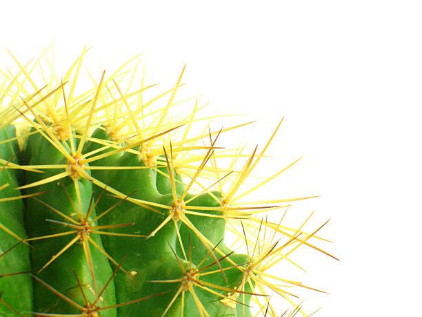 Cactus backgroud #3 stock photo
