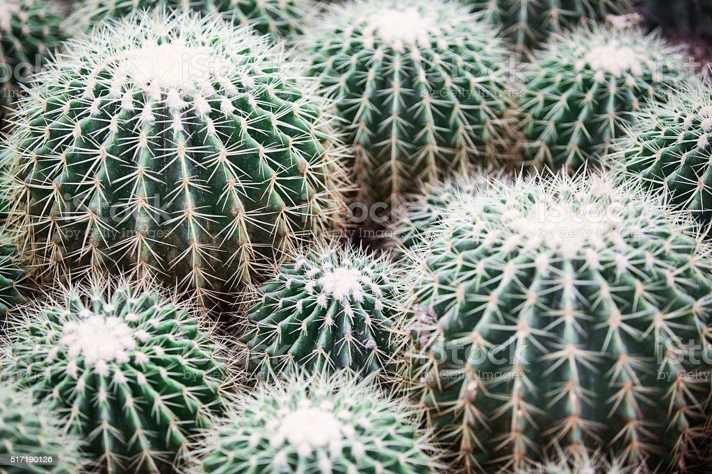 cactus Background Pattern stock photo
