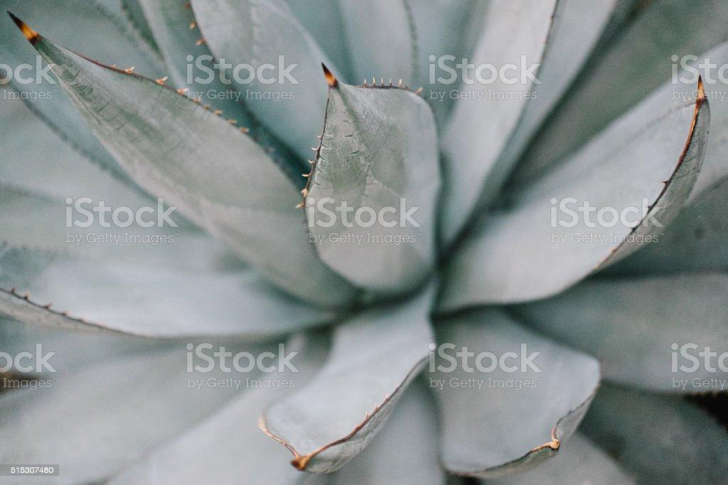 Cactus de fondo - foto de stock