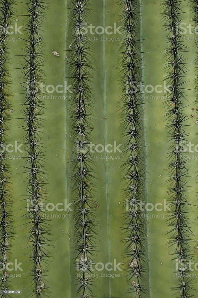 Cactus Background royalty-free stock photo