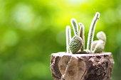 Cactus botanic garden