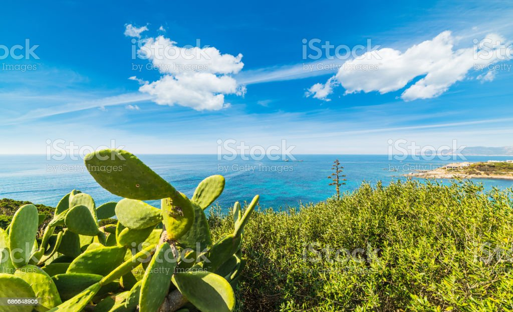 Cactus by the sea in Cala Caterina royalty-free stock photo